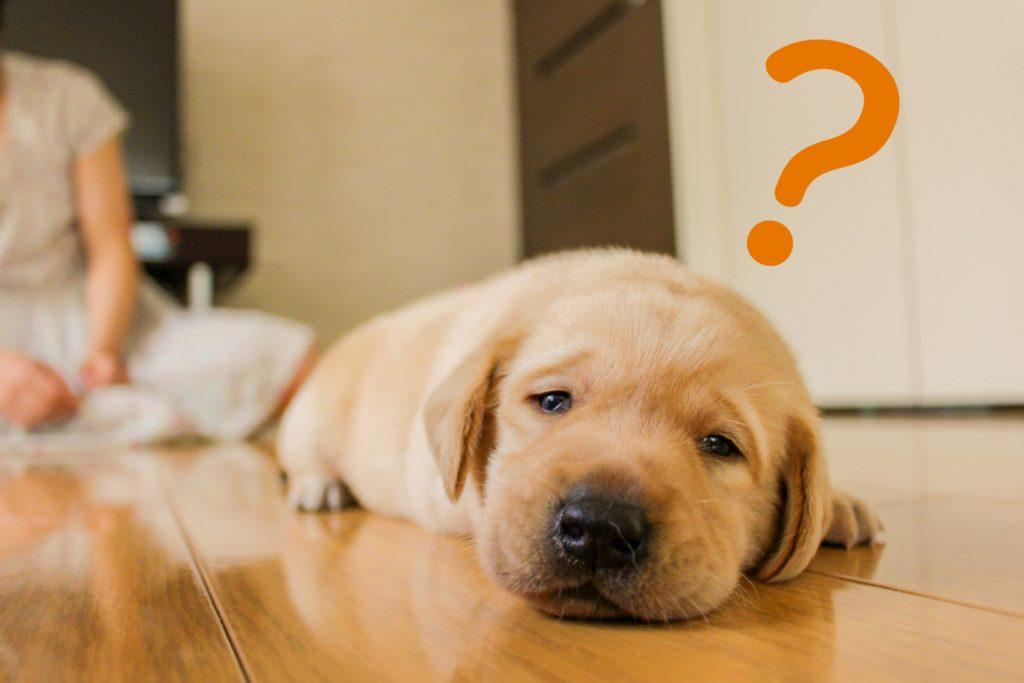 不思議 疑問 犬 動物